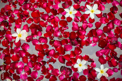 Frangipani petals and flowers in the bath
