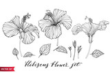 Vector set of hand drawing hibiscus flowers different shapes, monochrome artistic botanical illustration, isolated floral elements, hand drawn illustration. - 207348925