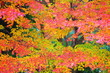 紅葉の公園の風景19