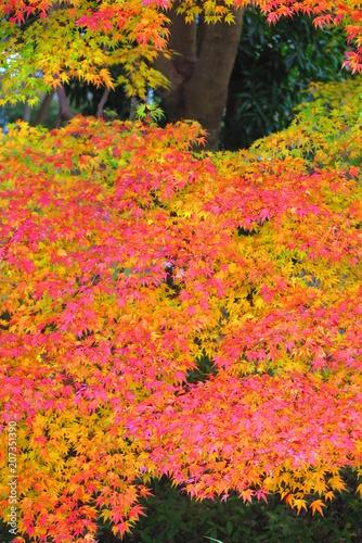Fotobehang Koraal 紅葉の公園の風景18