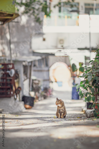 Stray Cat in town