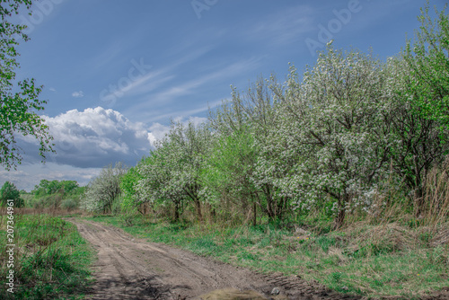 Fotobehang Khaki Spring, landscape, flowering fruit trees near dirt road with beautiful blue sky and clouds