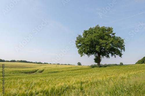 Fotobehang Lente agriculture - schleswig holstein - germany