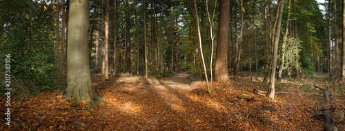 Forest in fall. Harvest in the woods. Panorama - 207387106