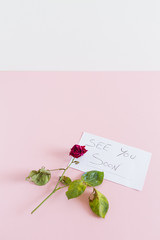 Dead Rose on a colored background. copy space