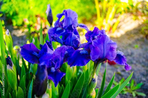 Aluminium Iris Цветы