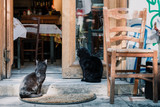 Two cats in front of a restaurant in Athens, Greece - 207401997
