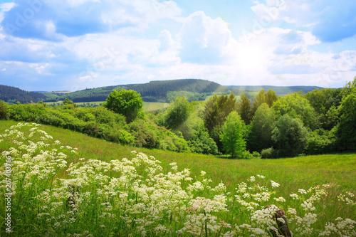 Green flowers field landscape and sunrise. - 207403766
