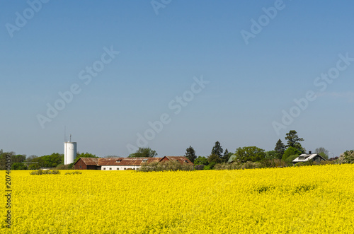Fotobehang Meloen Countryside view with a blossom rapeseed field