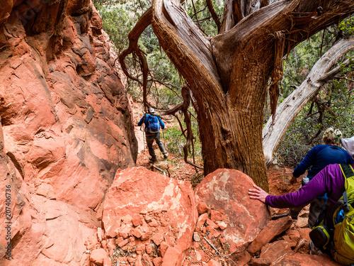 Aluminium Arizona Ancient trees, Arizona