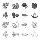 Ptrushka, black pepper, paprika, chili.Herbs and spices set collection icons in outline,monochrome style vector symbol stock illustration web. - 207425762
