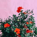 Flowers on a pink.  Plants on pink concept. Fashion minimal mood - 207429341