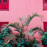 Palm on a pink location.  Plants on pink concept. Fashion minimal design - 207429506