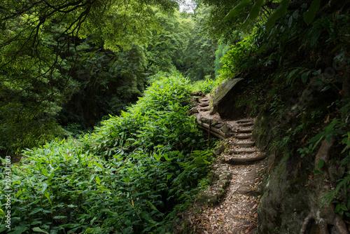 Fotobehang Weg in bos Sendero en el bosque