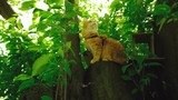 Beautiful red cat sitting on a tree in the forest, a ginger pet climbed onto a stump - 207436126