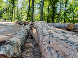 Woody landscape of forests of Povazsky Inovec