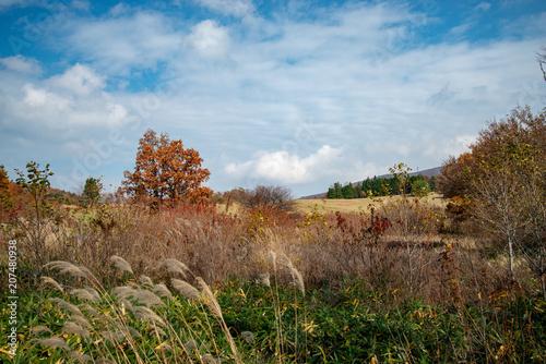 Plexiglas Diepbruine 八幡高原の秋