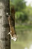 Squirrel on tree - 207484552