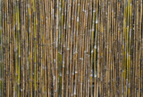 Bamboo wall texture or background