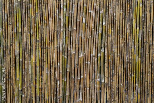 Fototapeta Bamboo wall texture or background