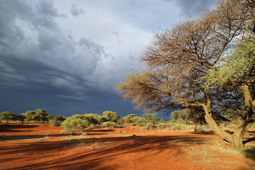 African savannah landscape against a dark sky of an approaching storm, South Africa.