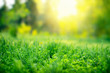 Green grass background with copy space