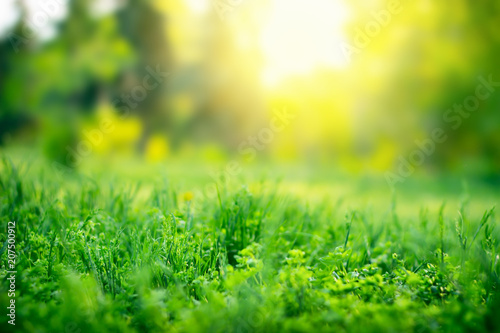 Foto Murales Green grass background with copy space