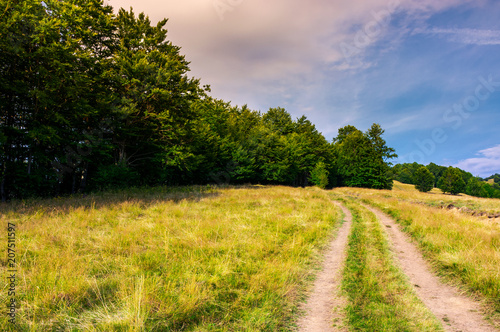 Canvas Honing road through grassy meadow in to the beech forest. lovely summer scenery of Carpathian mountainous area