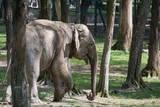 Elephant at zoo in Targu Mures, Romania,2018 - 207514546