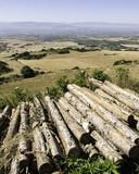 Felled tree trunks - 207523716