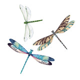 Watercolor dragonfly set - 207530316