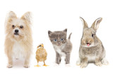 Animals on a white background - 207545573