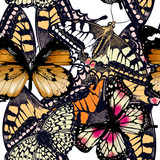 Fashion vector pattern with butterflies - 207569501