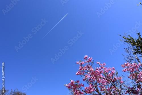 Aluminium Azalea 工石山山頂より上空を眺める 春(高知市)