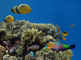 Corals reef and tropical fish - 207587379