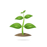 Plant sprout growing vector isolated - 207597108