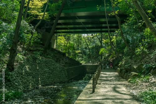 Fotobehang Tokio 東京の自然 等々力渓谷2 環八の高架