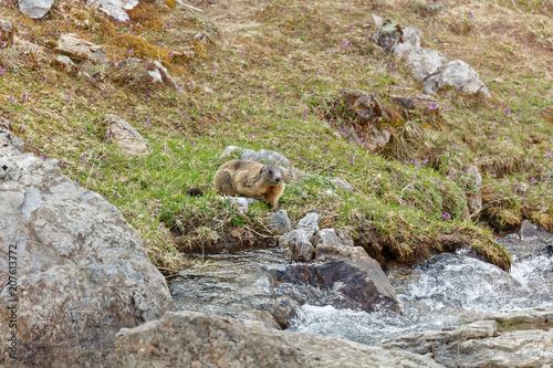 Foto Murales Marmots in Laguzape-Walsertal