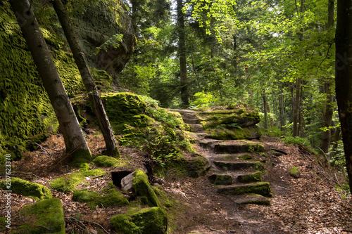 Aluminium Weg in bos Felsenwald von Dabo in den Vogesen
