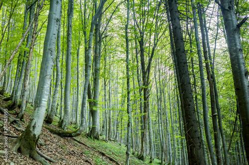 Foto Murales Magic spring forest