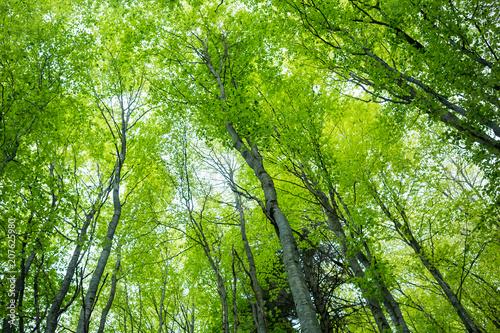 Fotobehang Lente Magic spring forest
