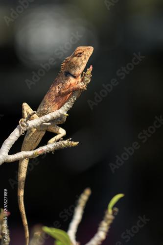 Fotobehang Kameleon Image of a chameleon on tree branch. Reptile. Animal.