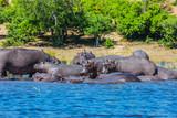 The tourism in Okavango Delta - 207639791