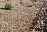 Xeriscaping with native desert drought tolerant succulents and cacti  in the streets of capital Arizona city of Phoenix - 207645912