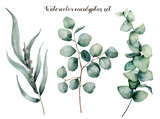 Watercolor eucalyptus realistic set. Hand painted baby, seeded and silver dollar eucalyptus branch isolated on white background. Floral illustration for design, print, fabric or background. - 207661125