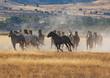 Herd of Wild Horses Running in the Desert