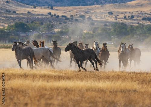 Fotobehang Paarden Herd of Wild Horses Running in the Desert