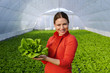 Leinwanddruck Bild - Happy beautiful young woman standing in green house and holding lettuce