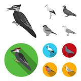 Woodpecker, stork and others. Birds set collection icons in monochrome,flat style vector symbol stock illustration web.