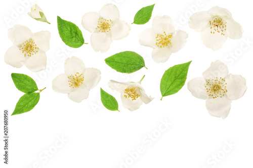 jasmine flower decorated with green leaves isolated on white background closeup with copy space for your text - 207680950